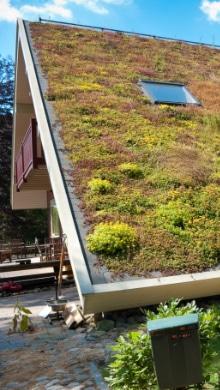 flat roof green roof