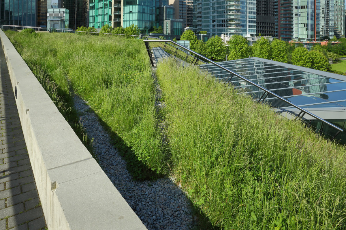 example green roof