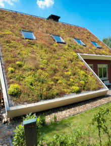 Green Roof Types Advantages Amp Disadvantages